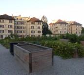 Photo - Plantage3©Spadom, Ville de Lausanne